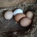 Eggs-r