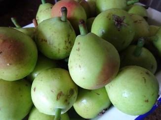 Paradise Pears - 2