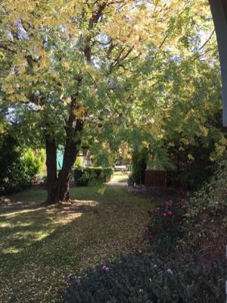 The yellow carpet of elm - peeking through to another garden room...