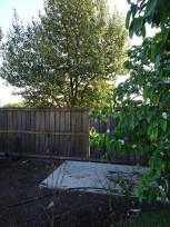 Garden Shed 12 October 2016