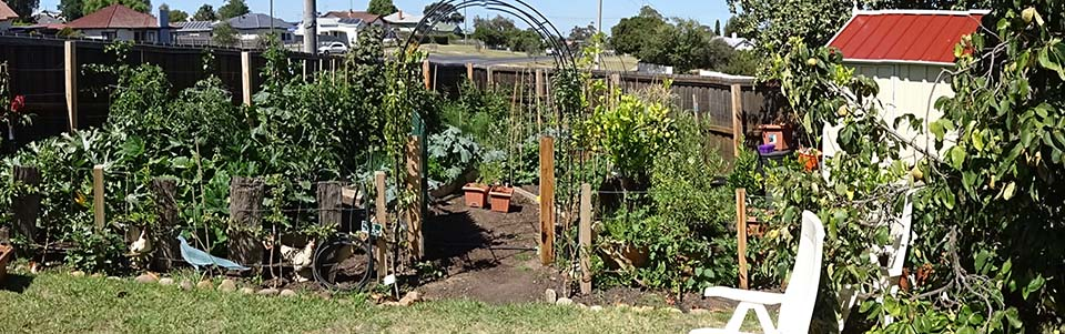A Stroll Through The Vegie Patch – The End of Summer