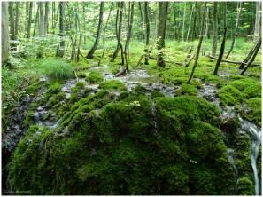 Wasser, Moos und Bäume