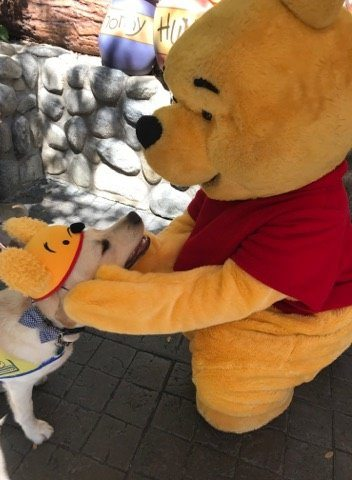 Image result for service dog at disneyland winnie the pooh