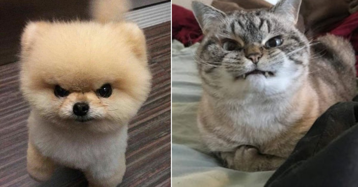 50 Animals That Tried To Look Angry But Ended Up Looking Cute Instead