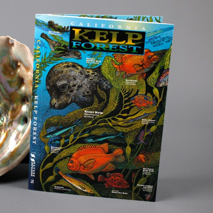 CA Kelp Forest Trifold