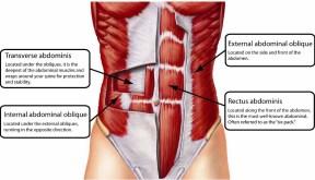 hips abdominals