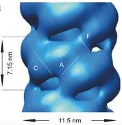 G. sorghi nitrilase helical symmetries
