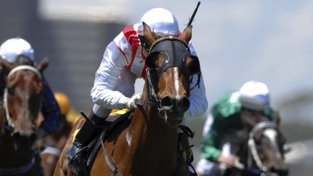 Close look at a horse racing with a jockey with other horses in the background