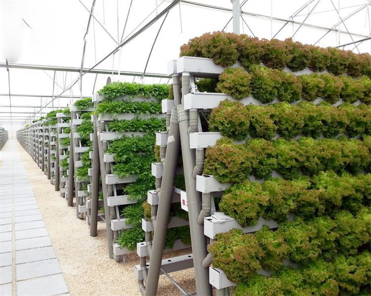 a type tower hydroponics system for greenhouse agriculture on Commercial Hydroponic Systems Design id=91568