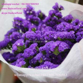Export High Quality Lavender Statice Flower Flowers Dried Most     Export High Quality Lavender Statice Flower Flowers Dried Most Vibrant  Colored  From Yunnan