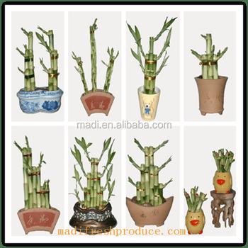 Good Plant For Bedroom Jurgennationcom HowlDb