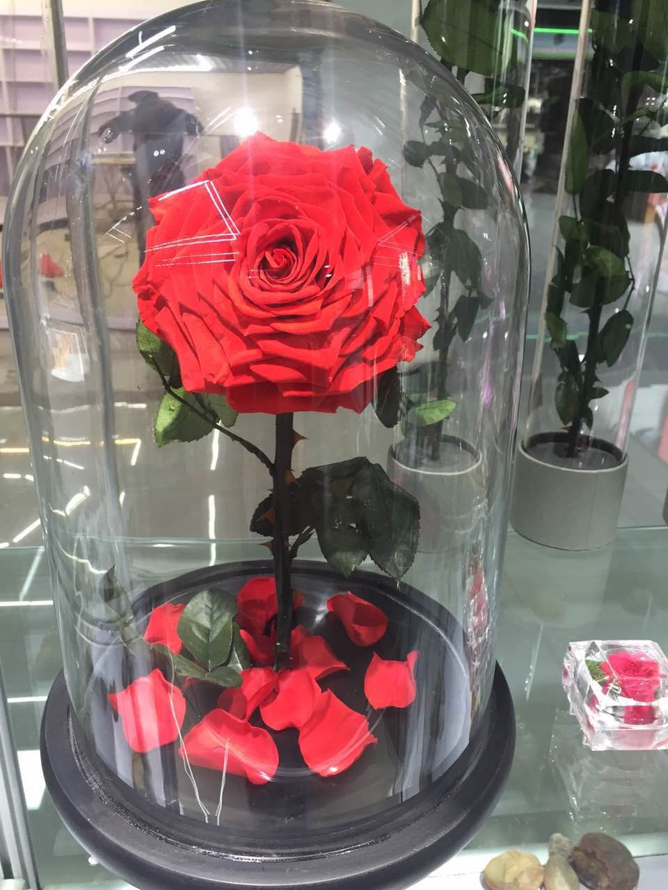 Preserved Roses In Glass Flower In Glass Tube From Yunnan