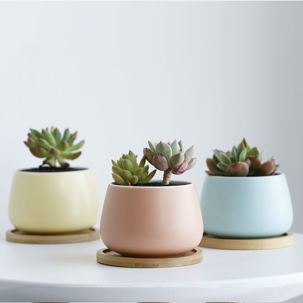 New Products High Quality Plants Flower Pots Cute Succulent Pots Ceramic Buy Succulent Pots Ceramic Succulents Flower Pot Succulent Plants Flower Pot Ceramic Product On Alibaba Com