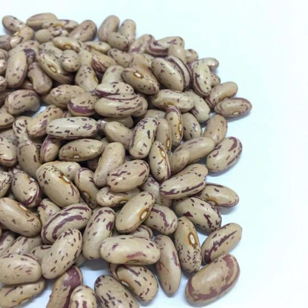 pdf phaseolus bean improvement in tanzania 19592005 - 1000×1000