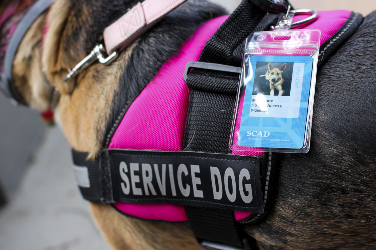 Defining Emotional Service and Emotional Support Animals