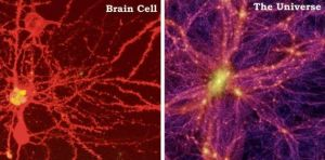 a comparison between a neuron and a simulated universe