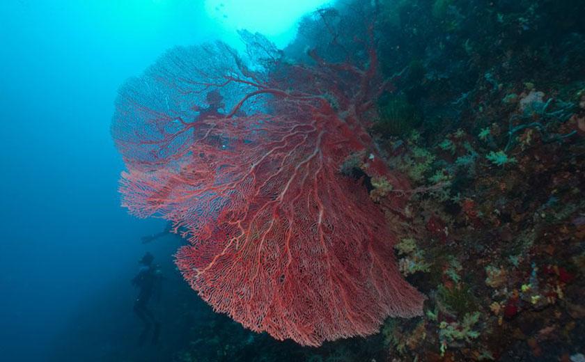 kilima drift dive site puerto galera