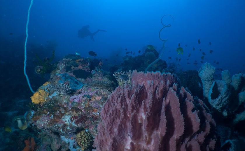 kilima drift dive site sabang puerto galera
