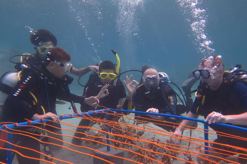 students building coral nursery puerto galera philippines
