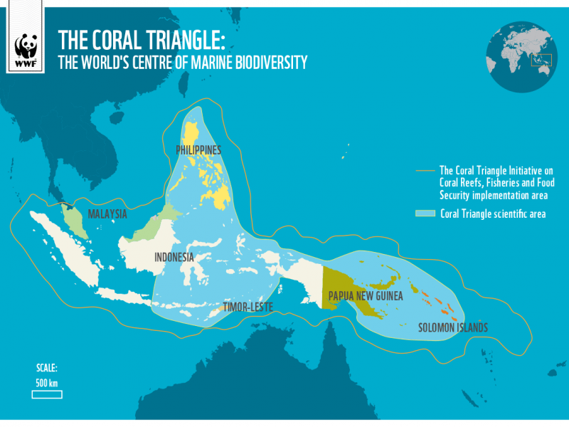 the coral triangle philippines