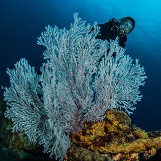 naui underwater ecologist coral reef