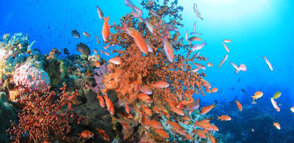 verde island puerto galera scuba diving