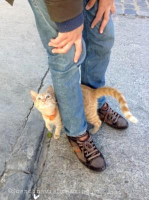 Puss in boots Valparaiso