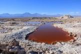 Algues salines du désert d'Atacama