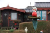 Kolonihave- La maison au perroquets