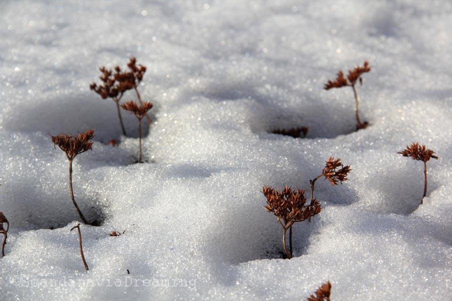 Dans la neige à Suomenlinna