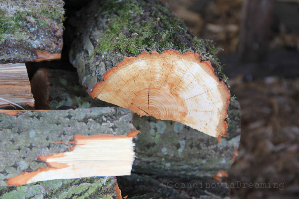 Bûche de bois Roskilde