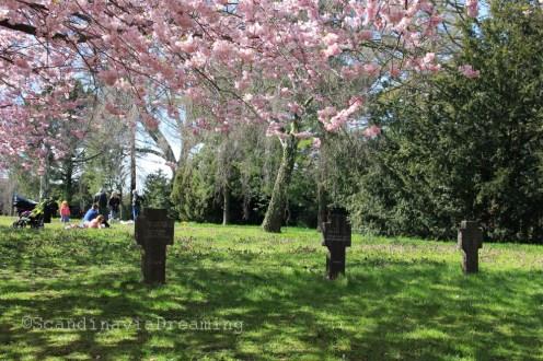 Reposer sous les cerisiers