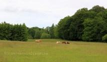 Chevaux dans la nature