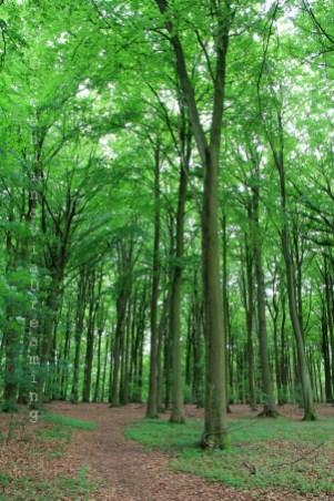 Des arbres xxl