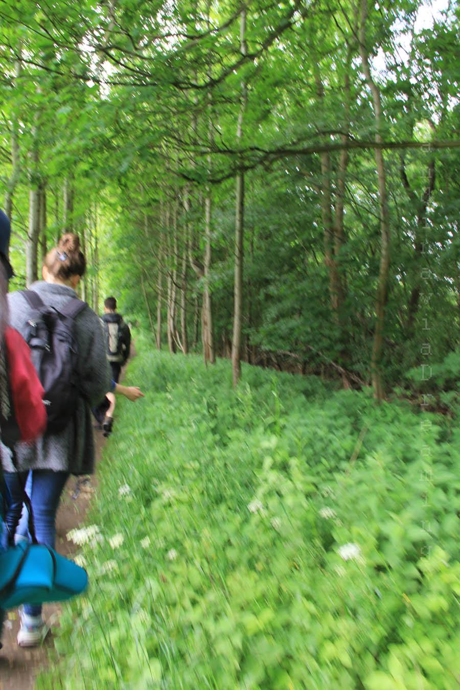 En marchant dans les bois
