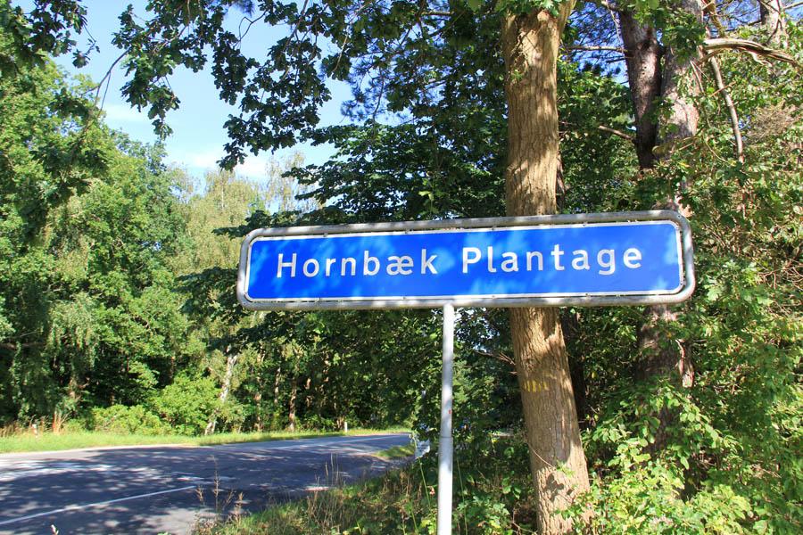 La forêt artificielle d'Hornbaek