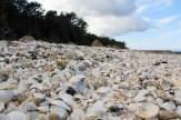 Une plage de coquillage