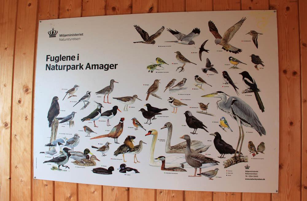 Les différents oiseaux d'Amager faelled