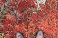 De la mousse rouge