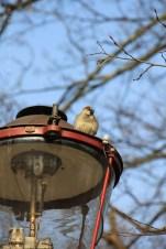 Birdy Berlin