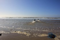 Chiens à la mer