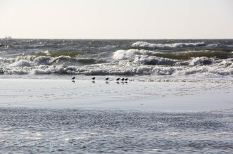 Oiseaux marins, Danemark