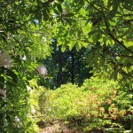 Jardin de nivaagarrdsmaleri samling
