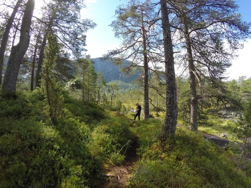 Randonnée Norvège