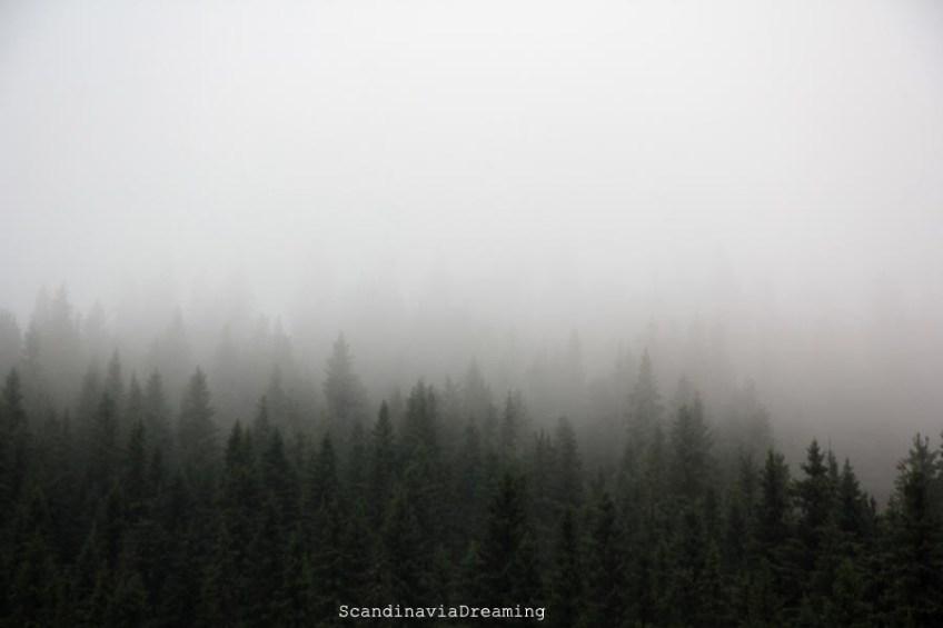 Forêt norvégienne