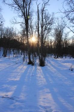 Forêt Tromsoe