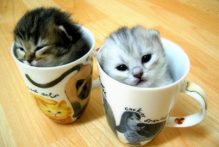 kittens-cups.jpg