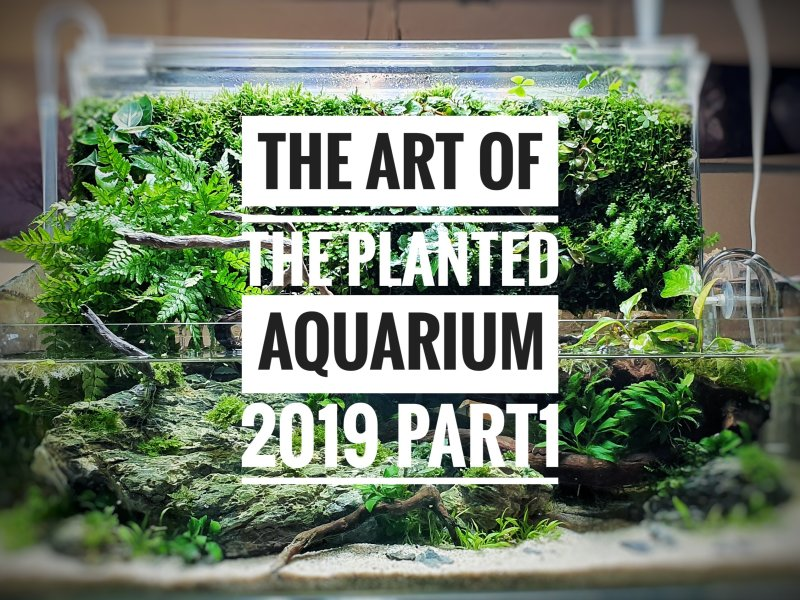 The Art of the Planted Aquarium 2019 – Erlebnisbericht (Part 1)