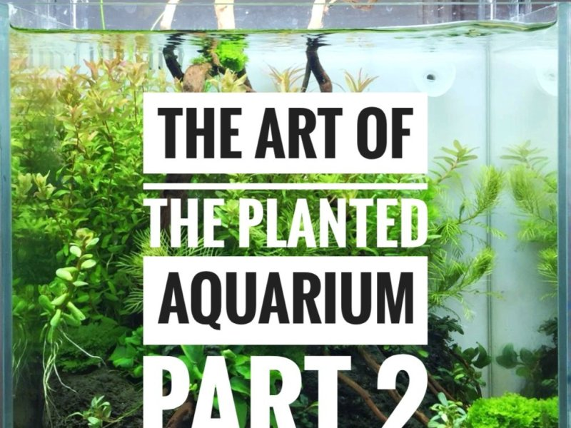 The Art of the Planted Aquarium 2019 – Erlebnisbericht (Part 2)