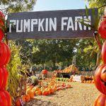Zo ziet de nieuwe Pumpkin Farm eruit tijdens Halloween Days